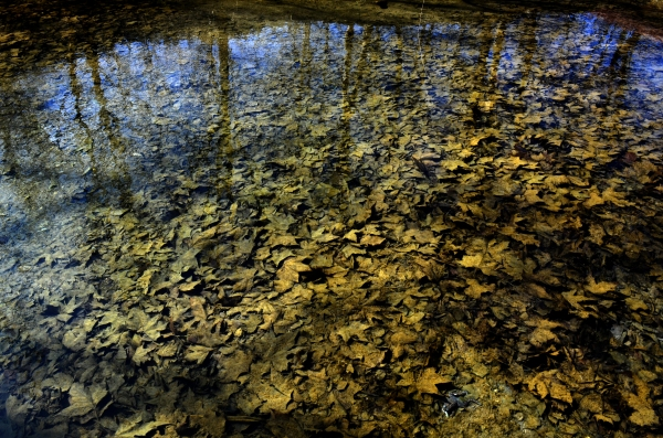 Foton de Flor - Parque Nacional Krka