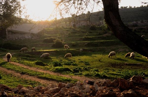Un paisaje típico de Ksamil