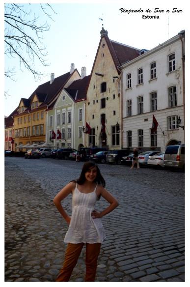 Flor en las calles de Tallin