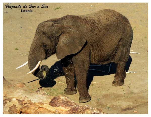 Elefantito comiendo :)